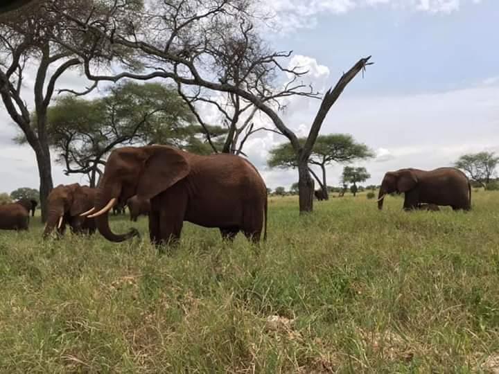 6 Day Budget Lodge Safari tour Tanzania |Tarangire Ngorongoro